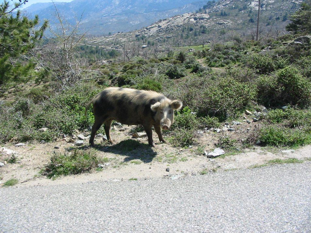 Korsika 096