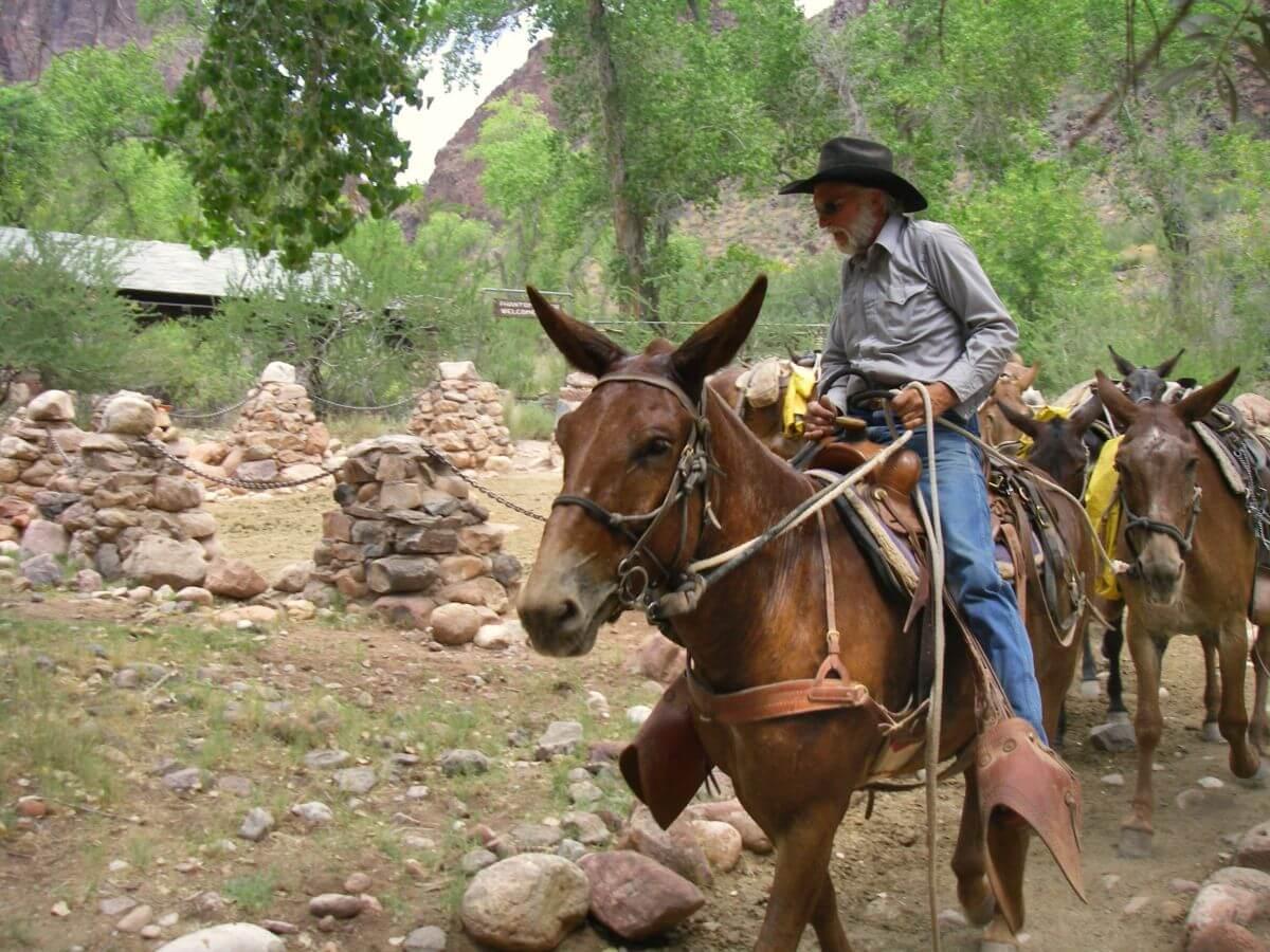 Reiter auf Maultier