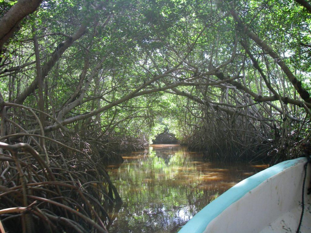 Mangroven.
