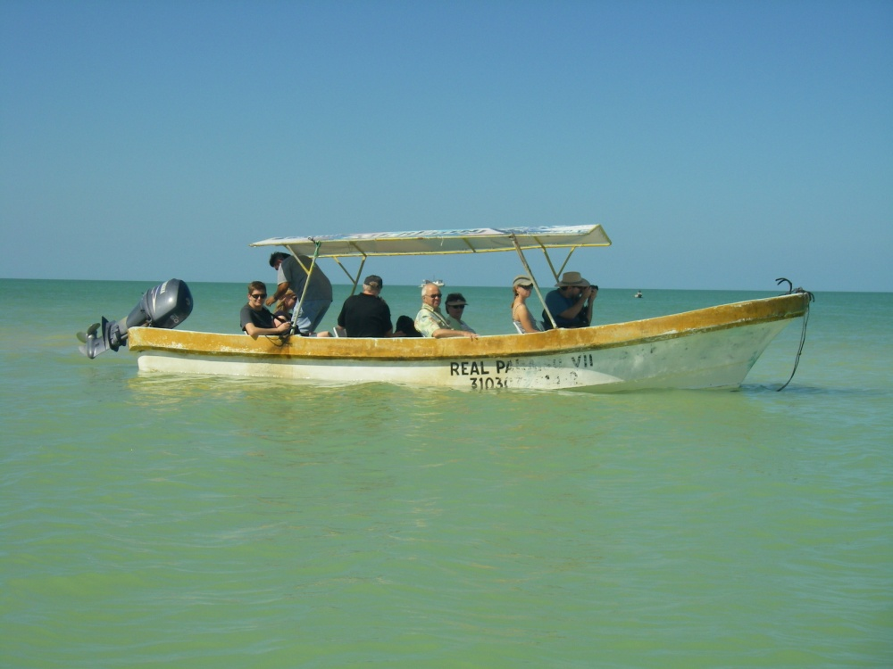 Boot auf grünem Meer.