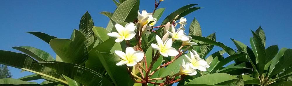 Entspannter Start an der Westküste Reunions