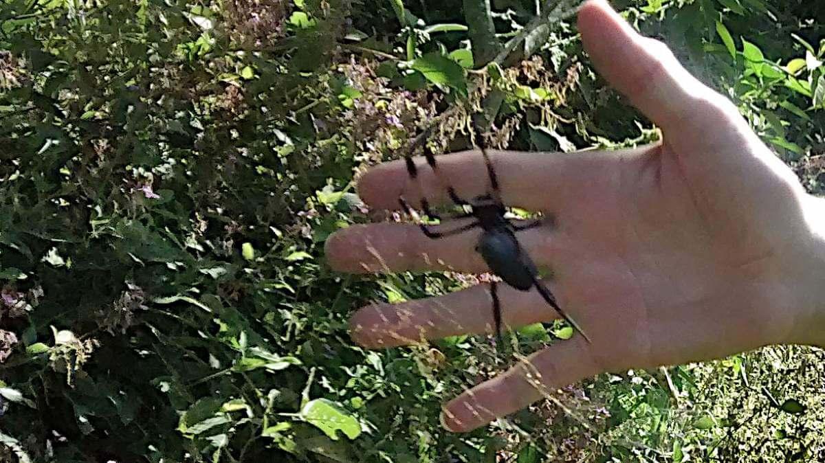 Spinne im Netz, dahinter eine Hand.