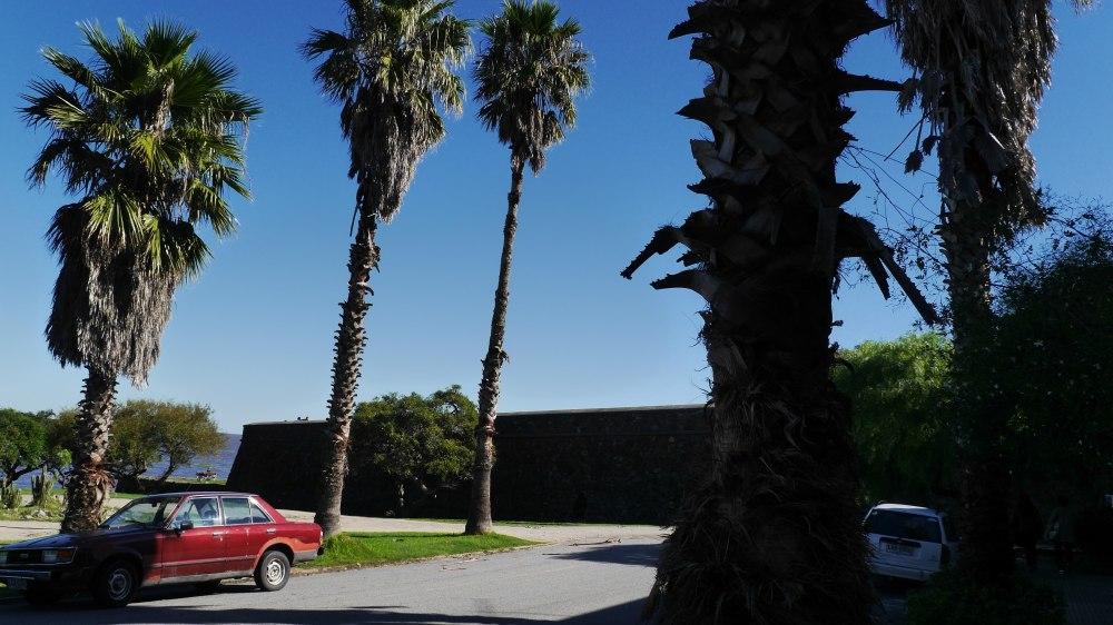 Hohe Palmen vor der Stadtmauer.