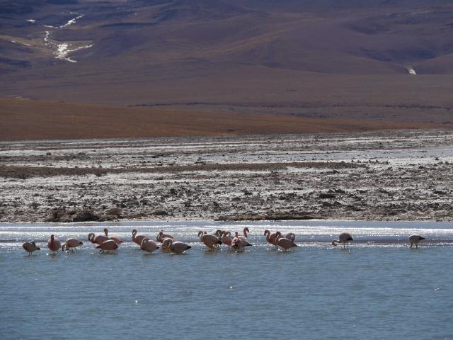 Doch noch ein paar Flamingos gesichtet!