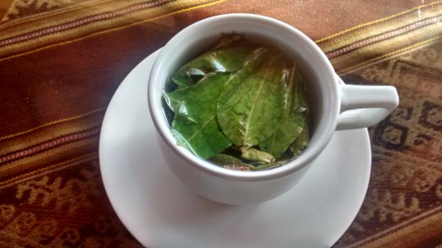 Tasse mit Tee aus Coca-Blättern.