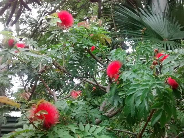 Tropische Vegetation auf dem Campingplatz