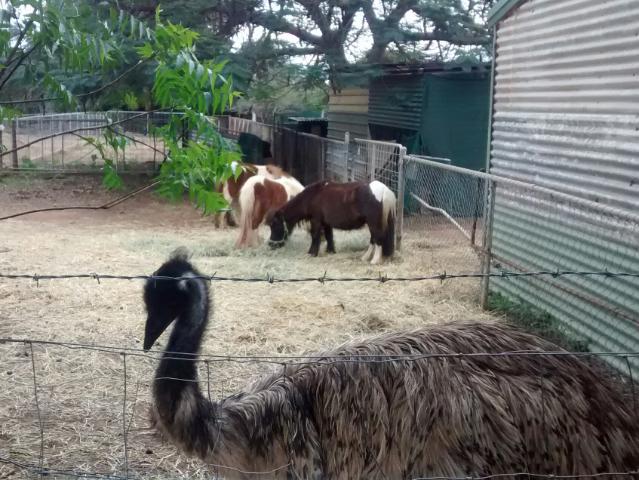 Und einen Emu gibt es auch