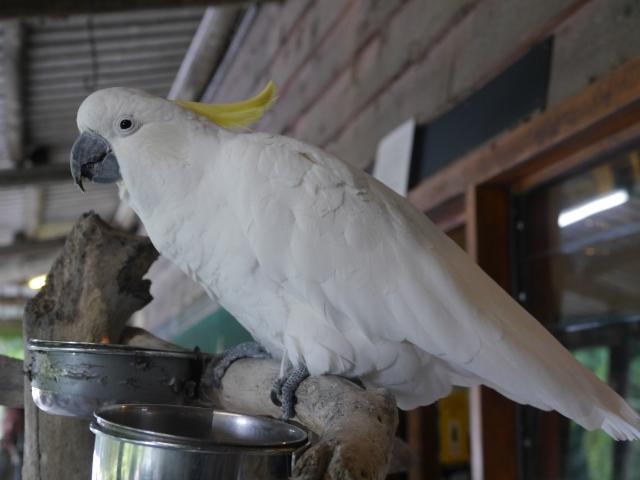Auch ein Kakadu gehört zum Haushalt