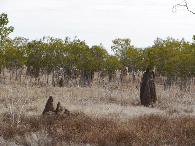 Termitenhügel am Savannah Way