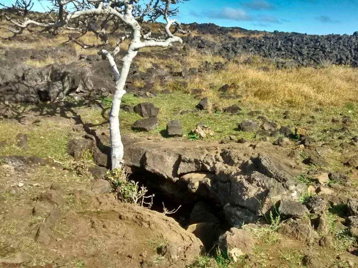 Loch im Boden, aus dem ein Baum wächst.