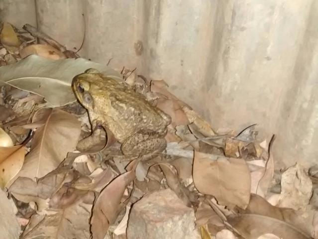 Ein Frosch kommt selten allein