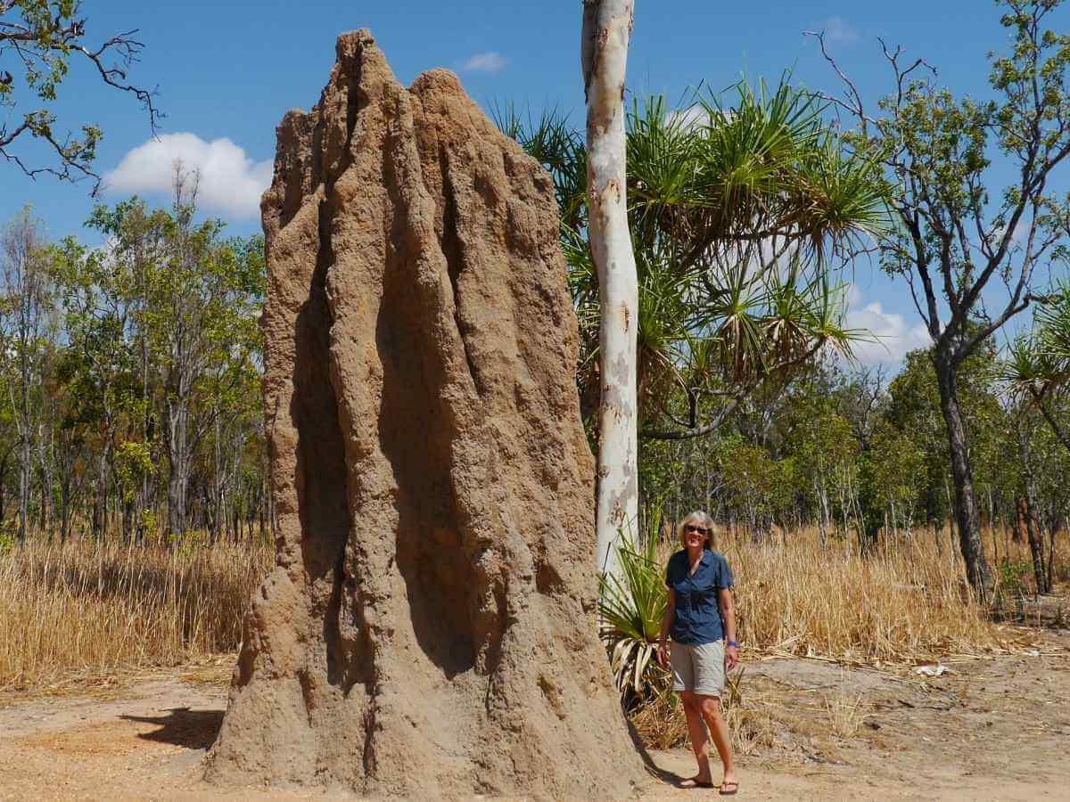 Gina steht neben einem 6 Meter hohen Termitenhügel.