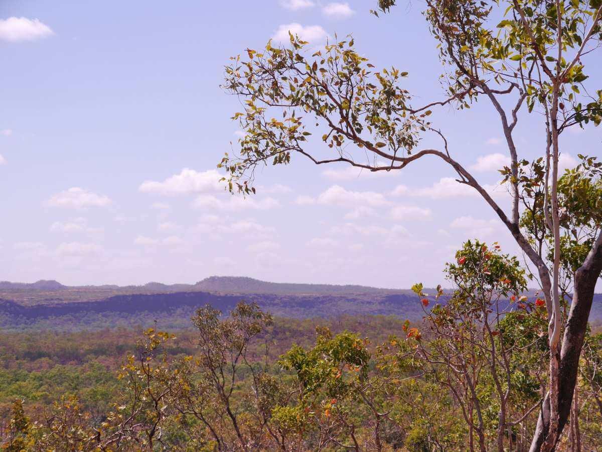 Blick über grüne Landschaft des Kakadu National Park.