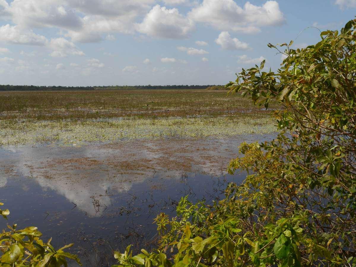 Blick über Sumpflandschaft.
