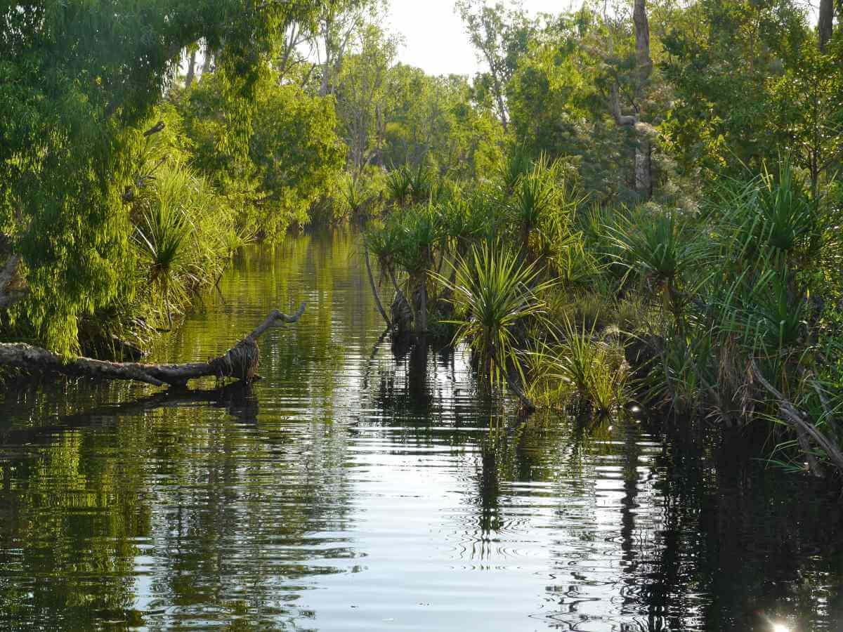 Abfluss aus dem See mit grüner Vegetation an den Ufern.
