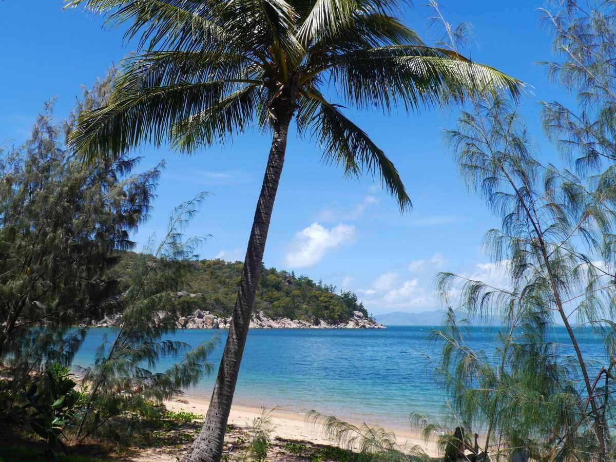 heller Sandstrand mit Palmen und blauem Meer.