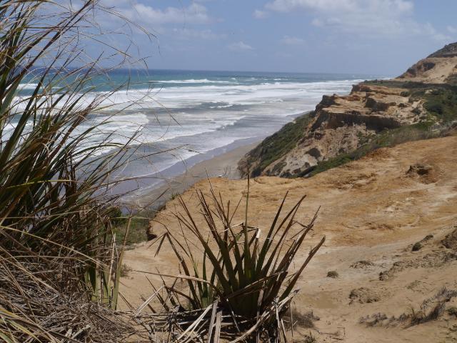 Bayleys Beach ist übrigens viel länger als Ninety-Mile-Beach. Aber nicht so bekannt, daher donnern hier auch keine Tourbusse lang
