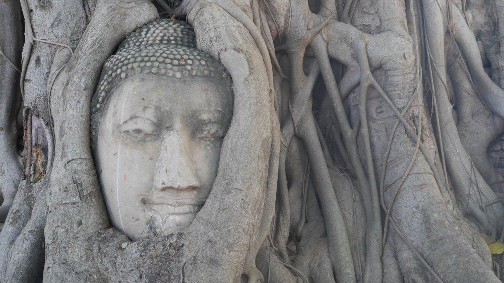 In Baumwurzeln eingewachsener Buddhakopf.
