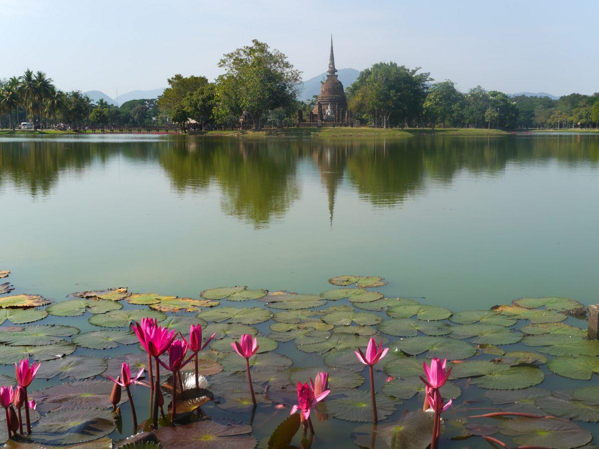 Teich mit pinken Blüten, am anderen Ufer Tempel.