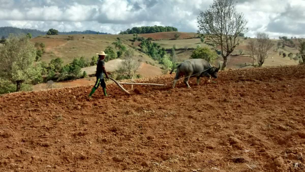 Bauer mit Ochsenpflug in Myanmar.