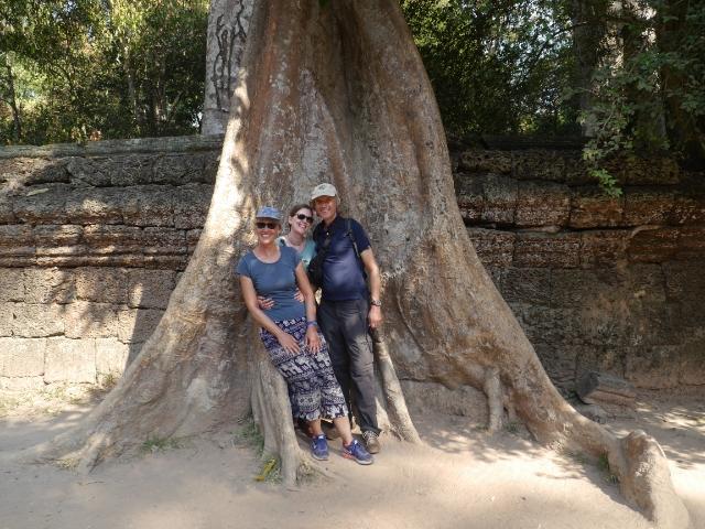Angkor Wat Baum Familie