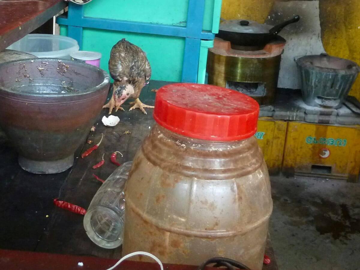 Ein Huhn läuft über die Arbeitsfläche der Küche
