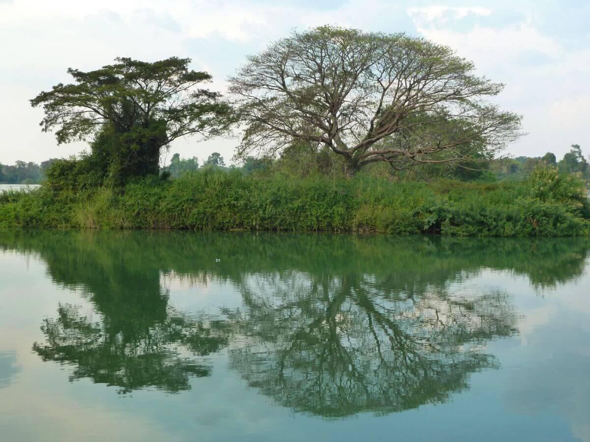 Zwei riesige Bäume am Ufer spiegeln sich im Wasser