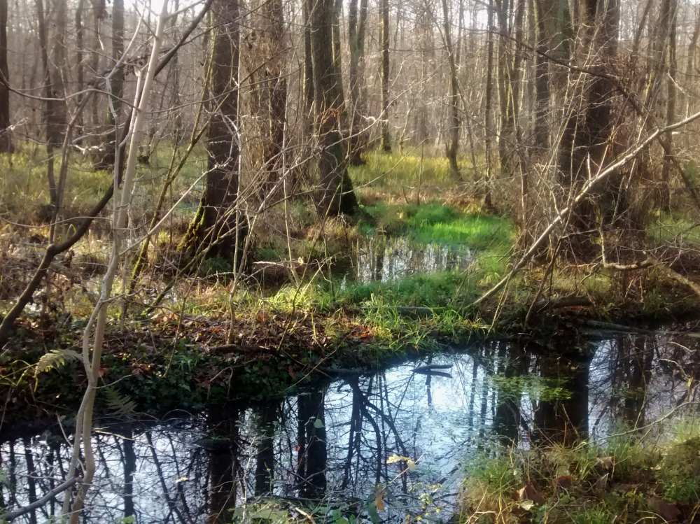 Wasser steht zwischen Bäumen am Sieben-Brücken-Weg.