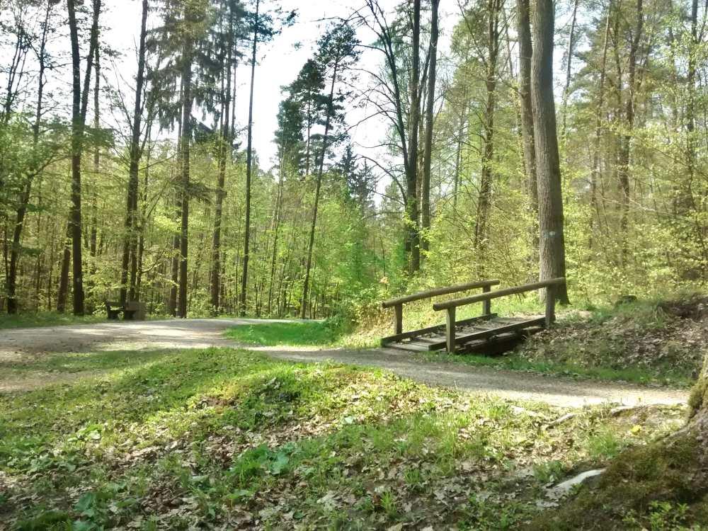 Wald mit Weg und Holzbrücke.
