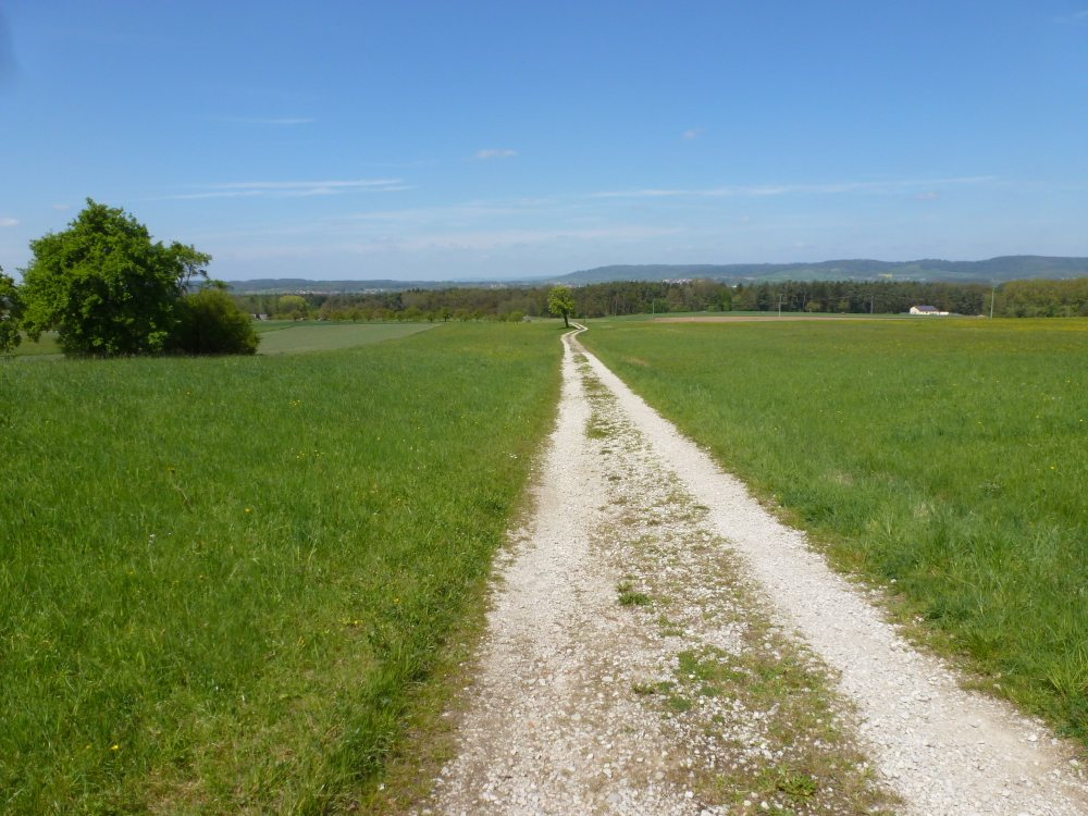 Feldweg über grüne Felder.