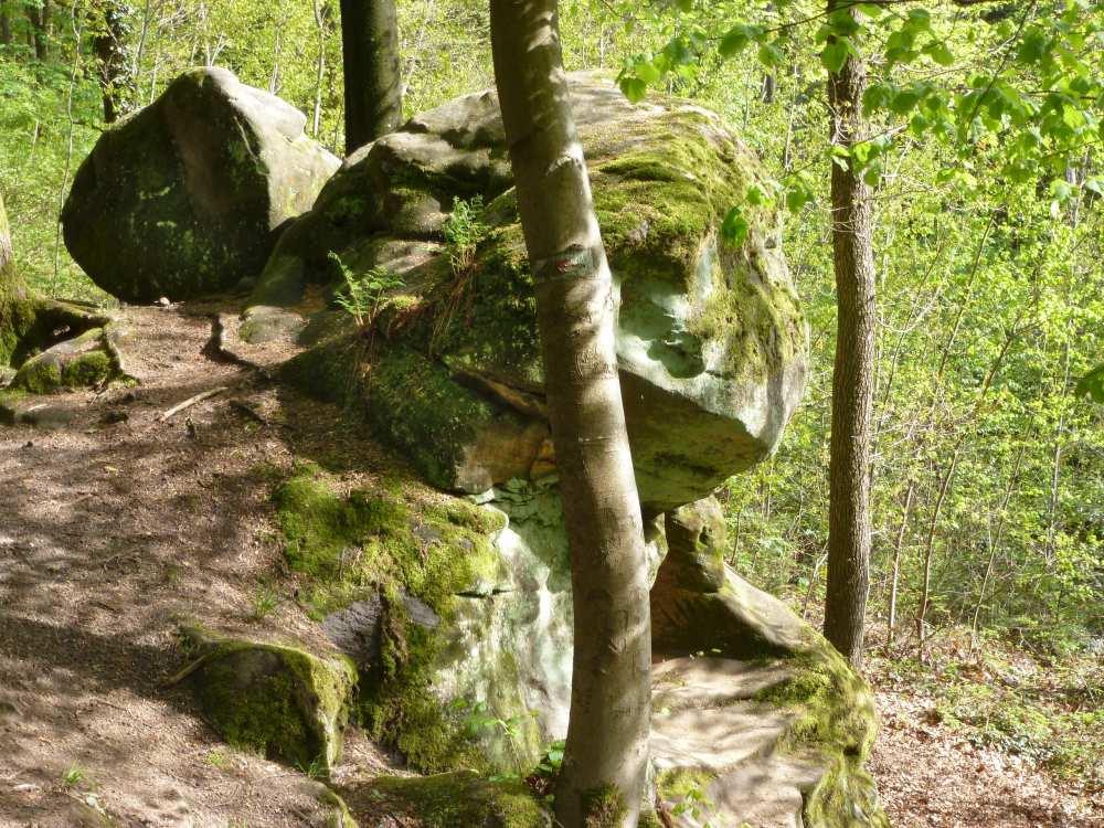 Felsblock im Wald.