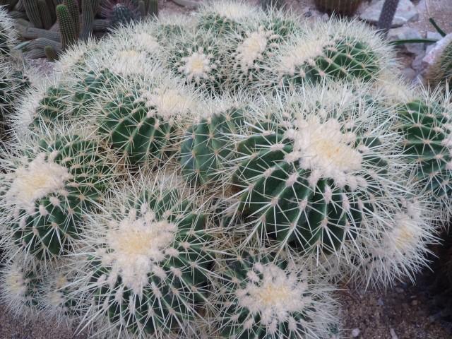 Grüne Hauptstadt Gruga Kaktus