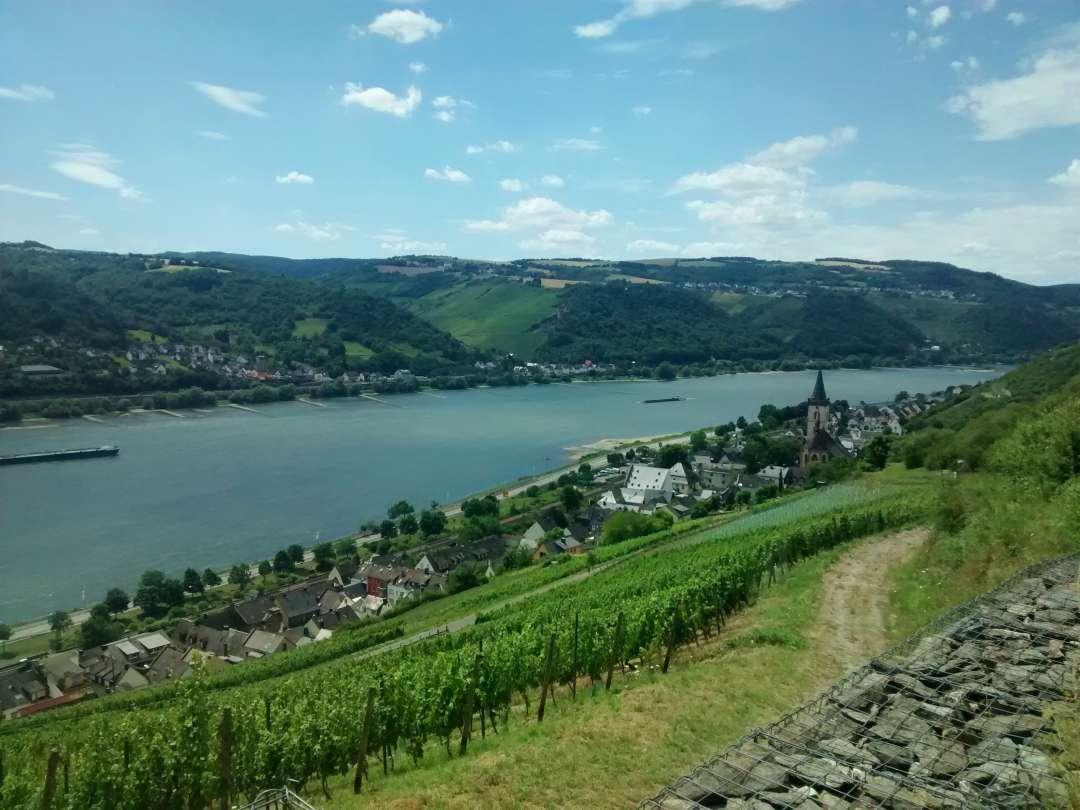 Rheinsteig Lorch
