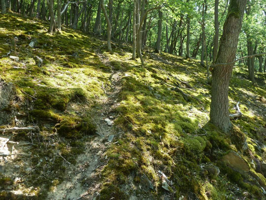 Rheinsteig Wald grün