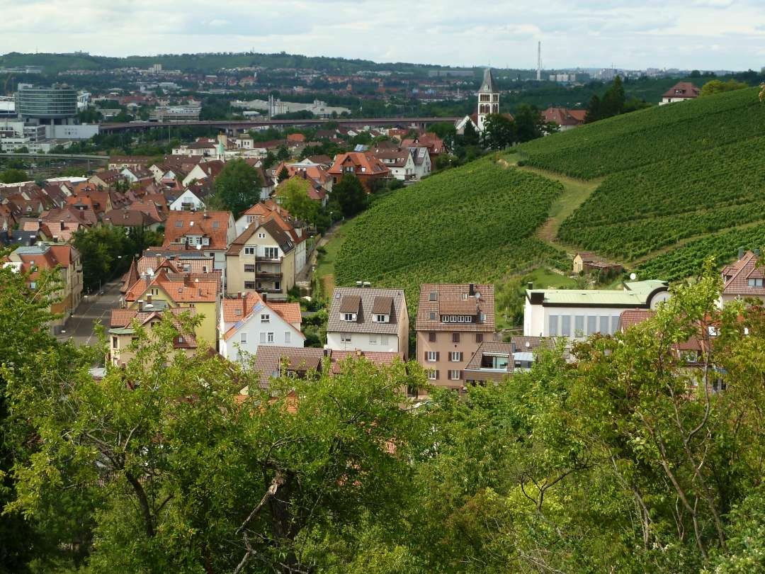 Untertürkheim Weinwanderung Weinberge