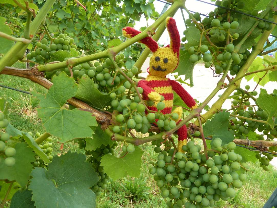 Stuttgart Weinwanderung Weinreben