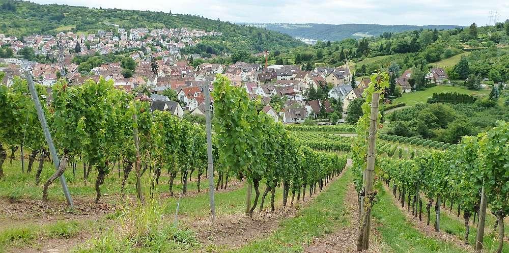 Weinwanderung Stuttgart