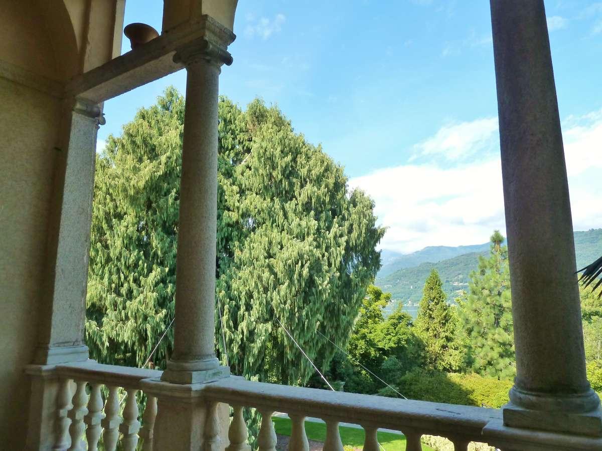 Blick vom Palazzo auf die Kaschmir-Zypresse.