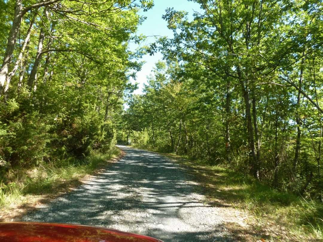 Schotterweg im Wald.