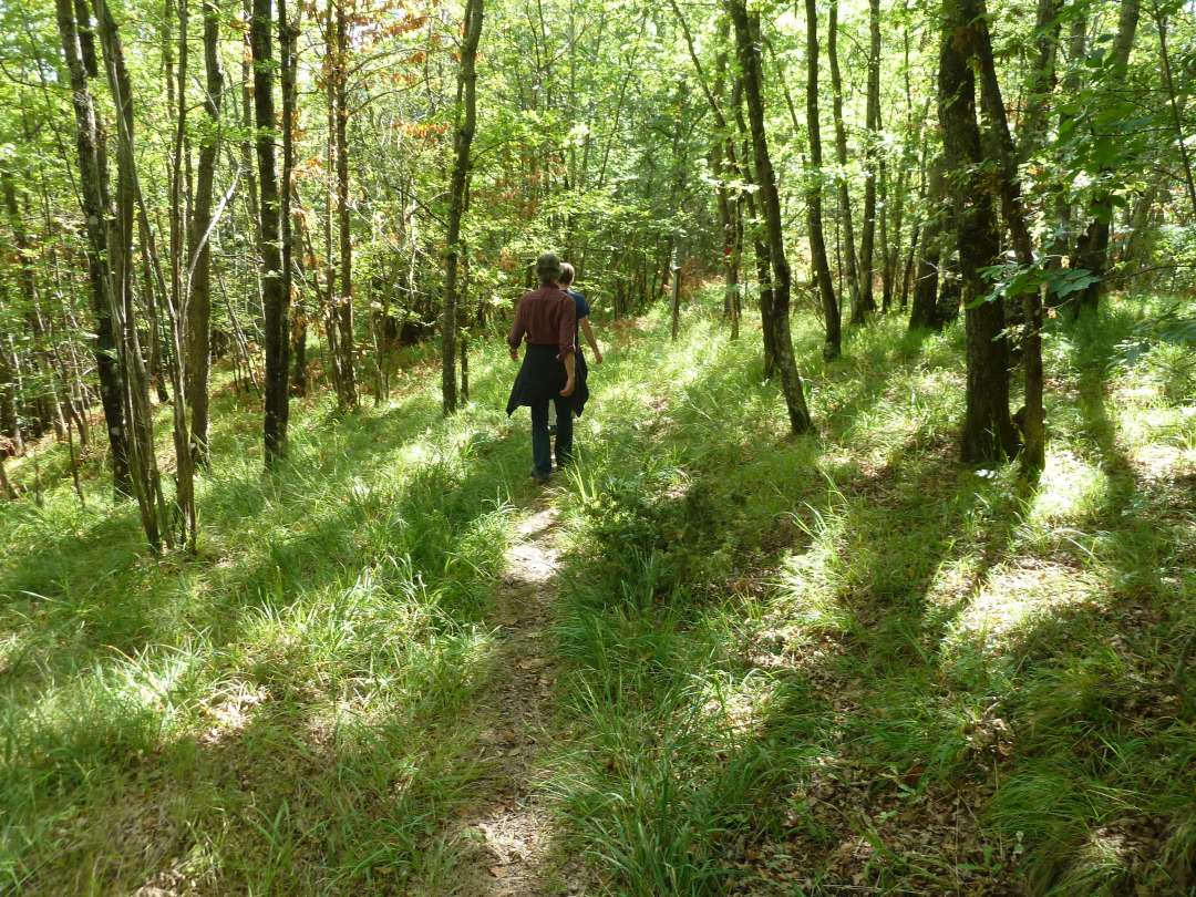 Wanderweg im Wald.