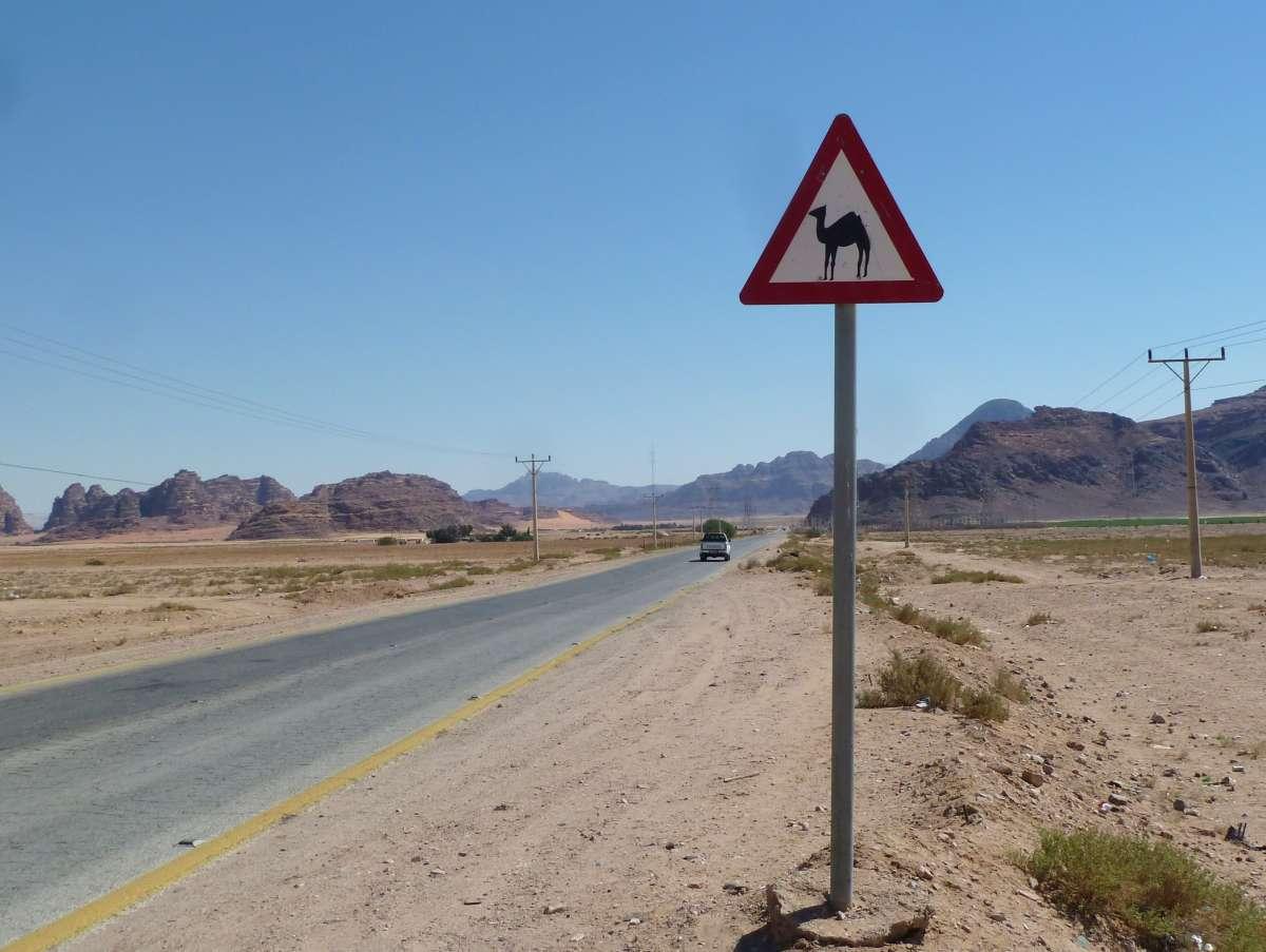 Warnschild mit Kamel