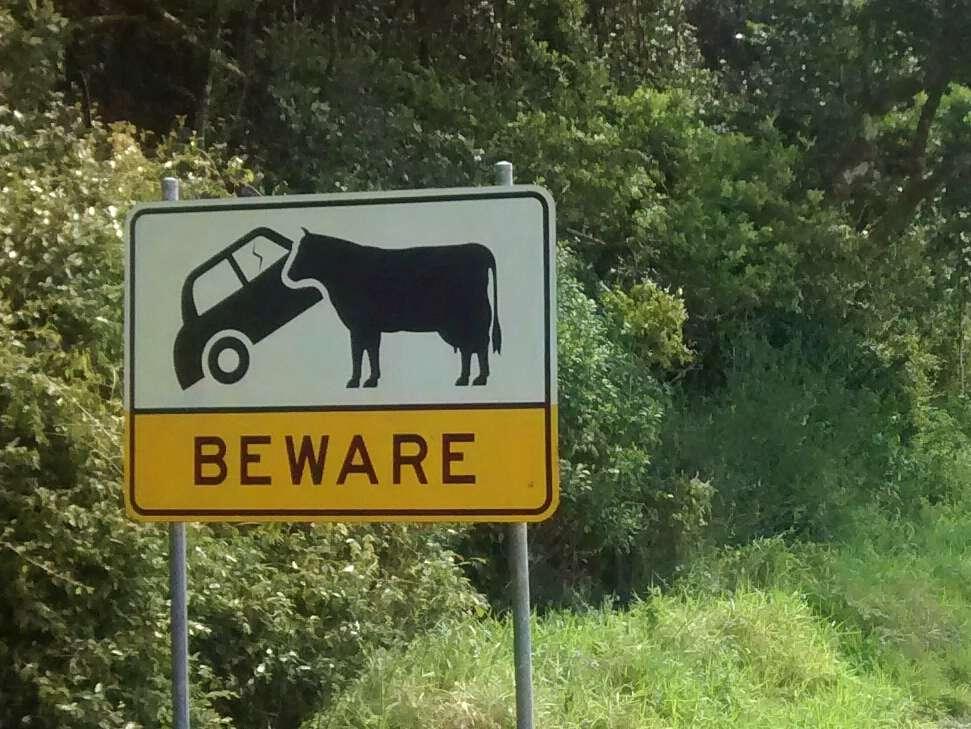 Schild, das vor Kollision mit einem Rind warnt