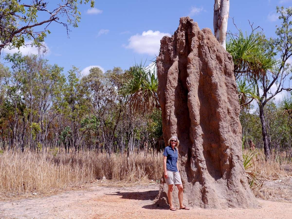 Gigantischer Termitenhügel
