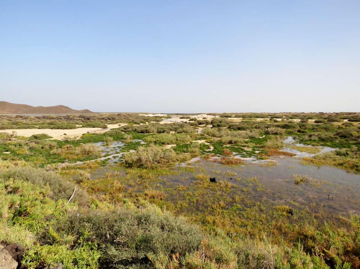 Die Salzwiesen auf Lobos