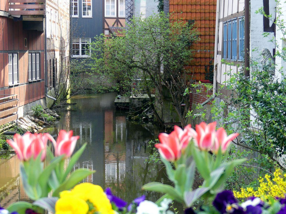Häuser am Kanal, im Vordergrund bunte Blumen