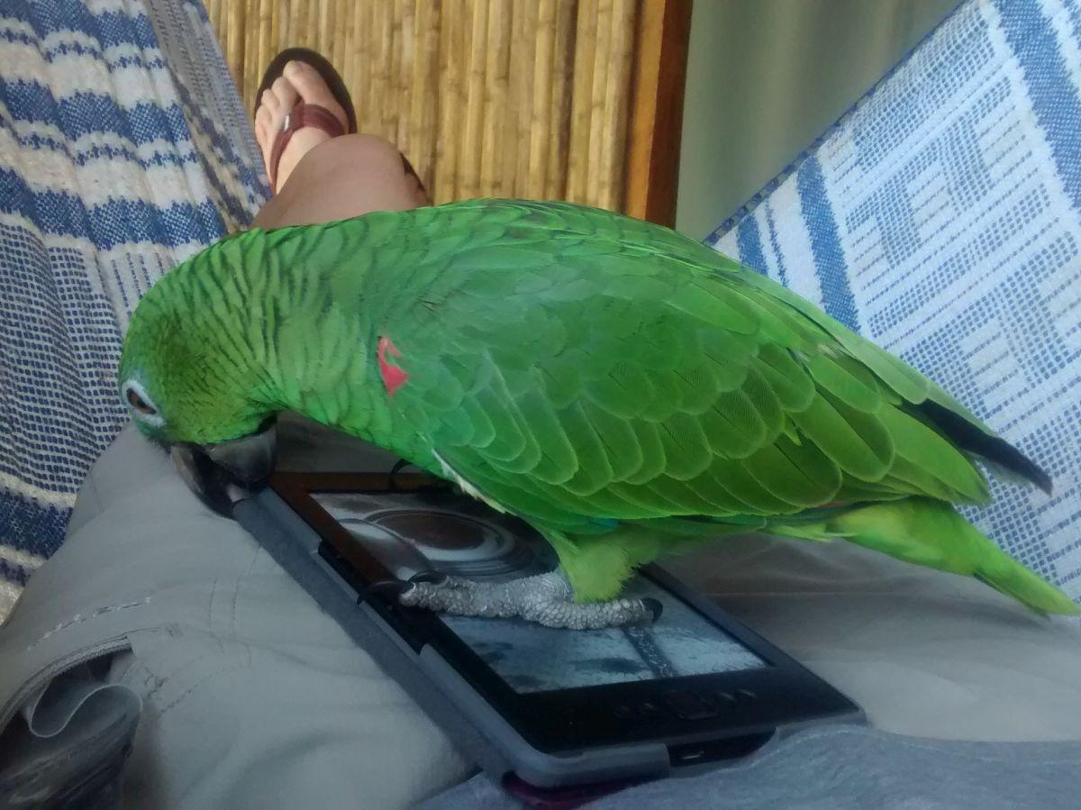 grüner Papagei auf Ebookreader