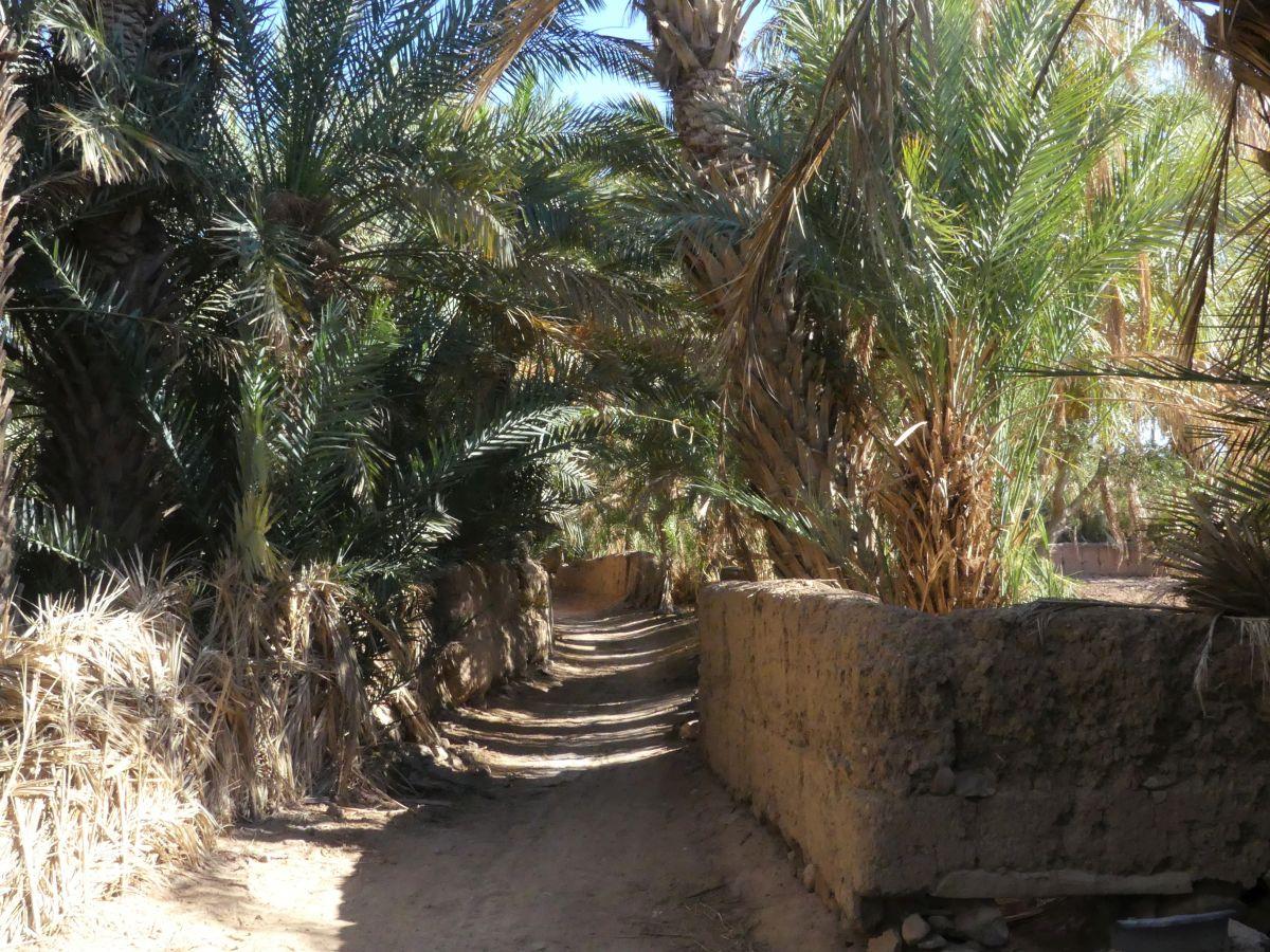 Palmen säumen einen breiten Weg