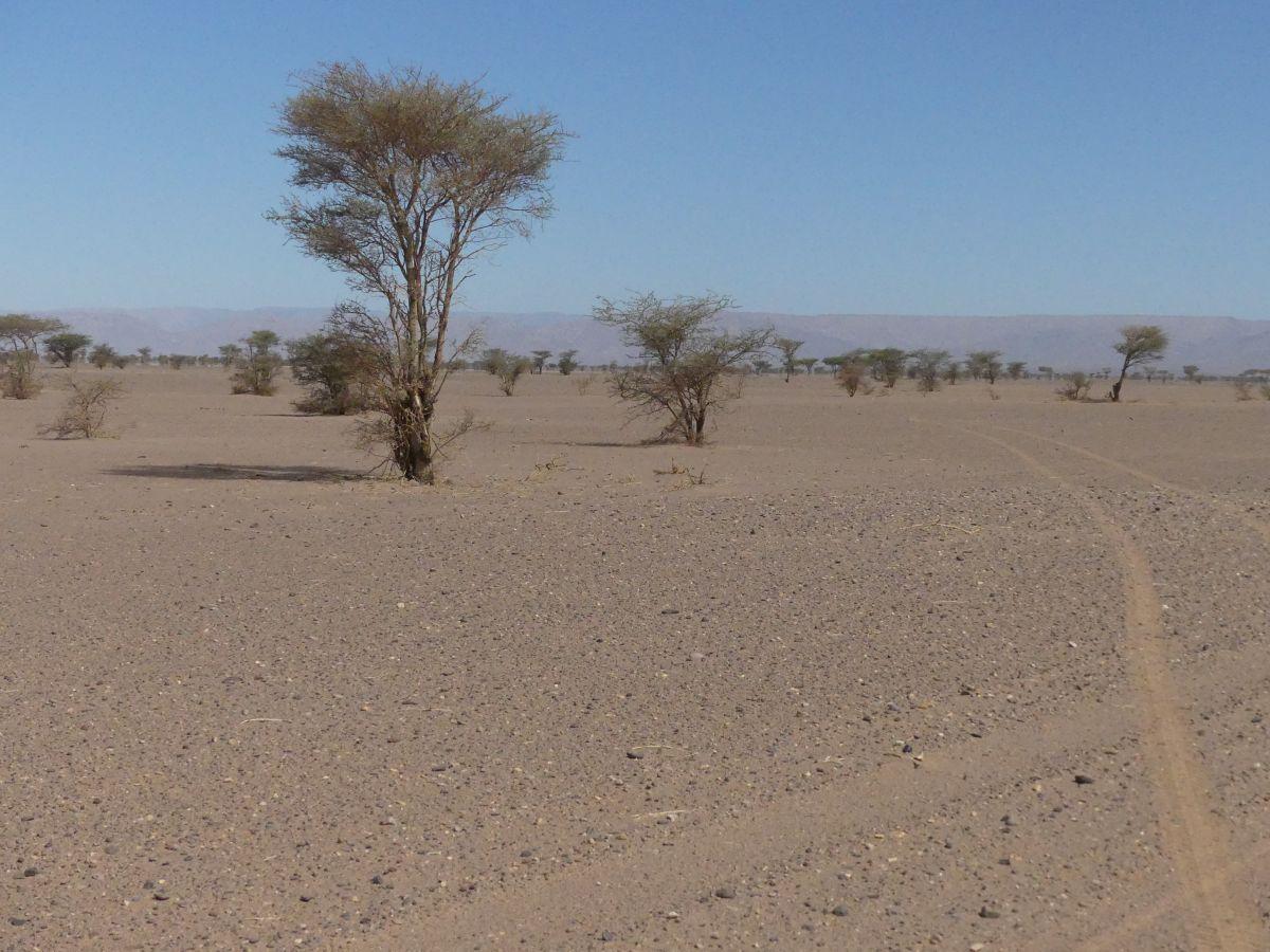 Geröllwüste mit einzelnen Bäumen