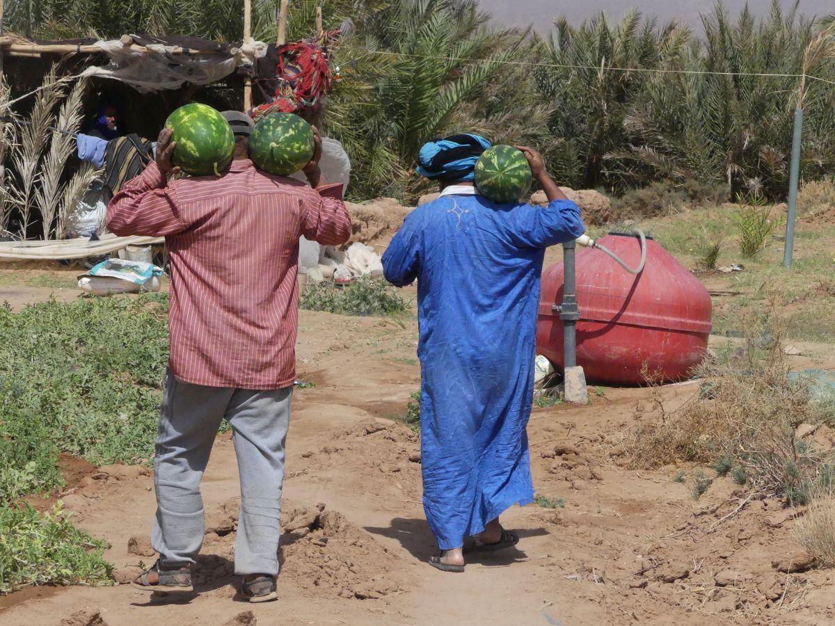 Zwei Berber tragen Wassermelonen auf ihren Schultern