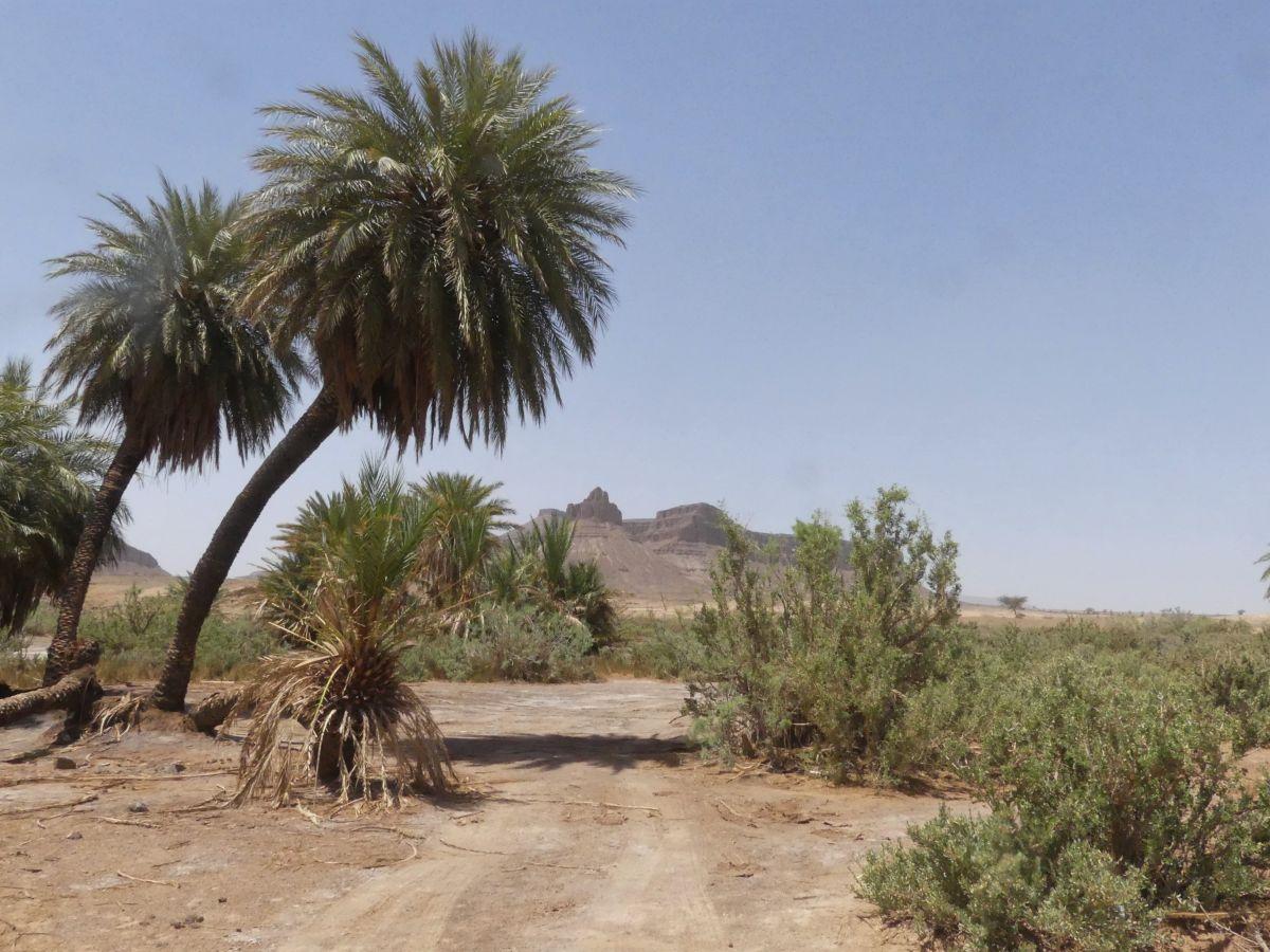 Palmen, im Hintergrund Berge
